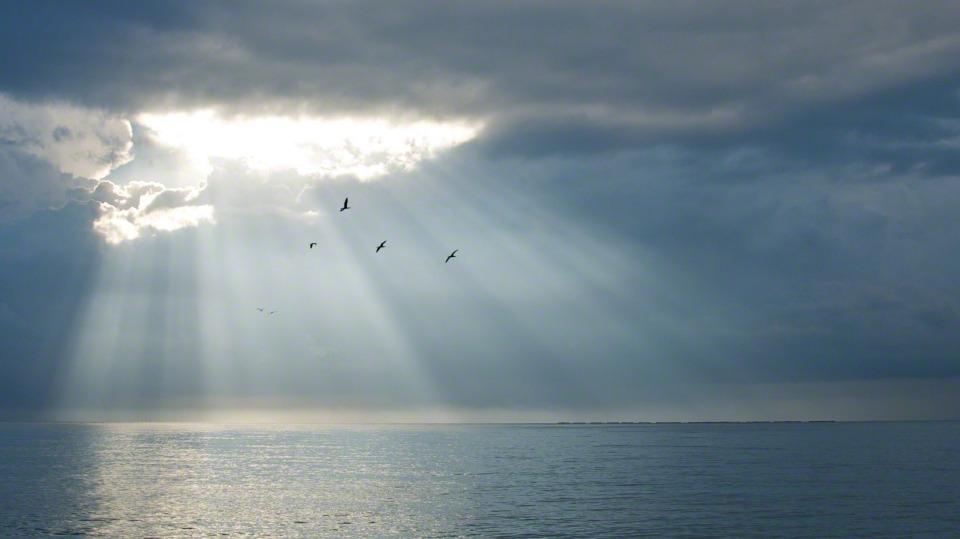 18d36-birds-flying-sunshine-933159-mobile
